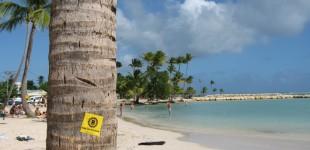 Ensbatuc en Guadeloupe