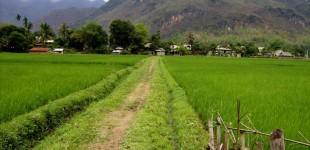 Ensbatuc au Vietnam